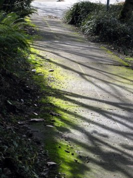 shadows1.jpg