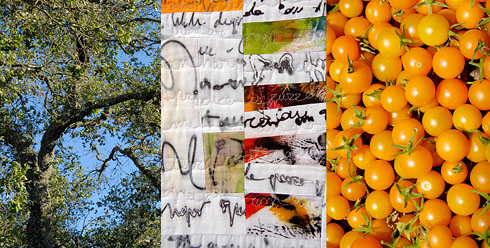 Oak by the studio. Secret Diary 10 (detail). Sun Gold Tomatoes.